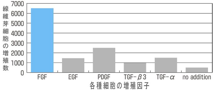 線維芽細胞の増殖数